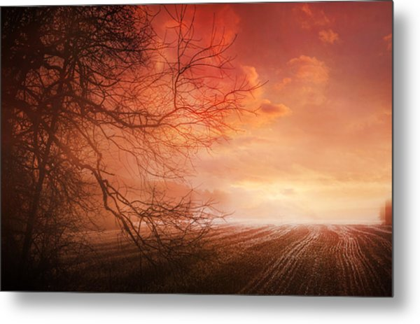 Orange Sunrise On Field Metal Print by Dorothy Walker
