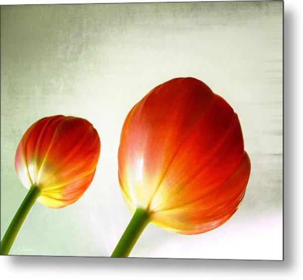 Orange Tulip Pops Metal Print by Julie Magers Soulen