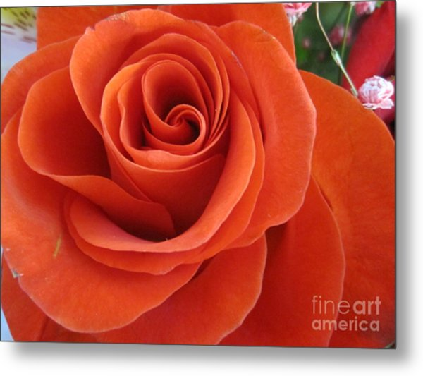 Orange Twist Rose 2 Metal Print