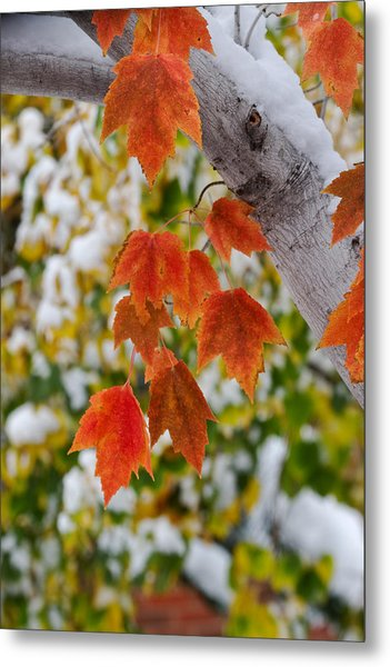 Orange White And Green Metal Print