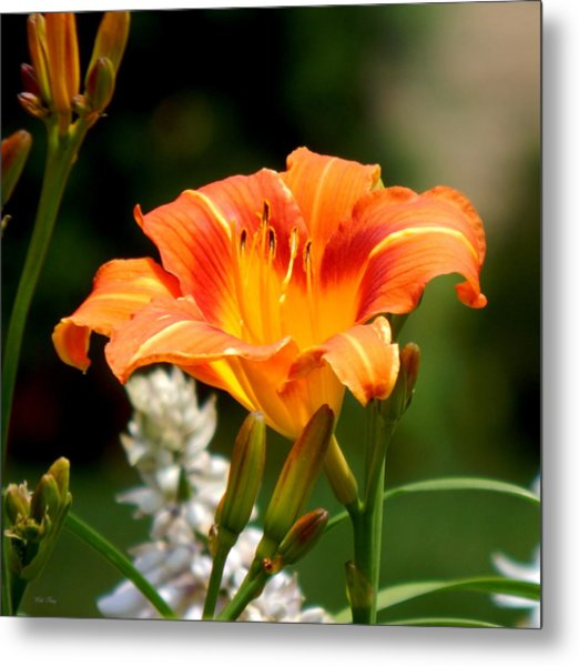 Orange And Yellow Glory Metal Print