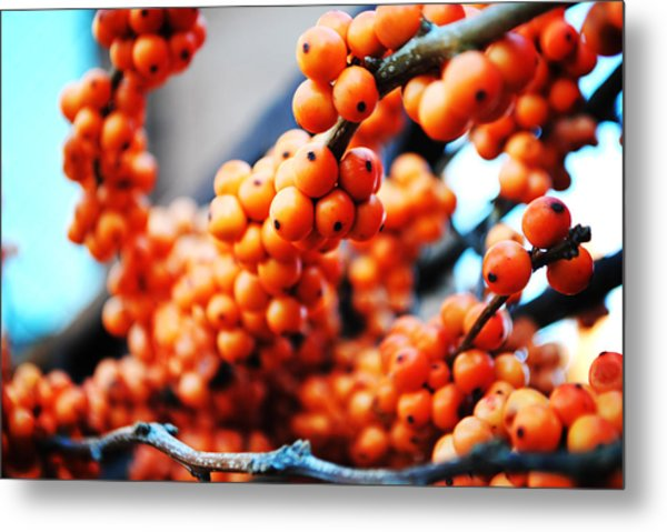 Oranges Metal Print by Charlie Gaddy