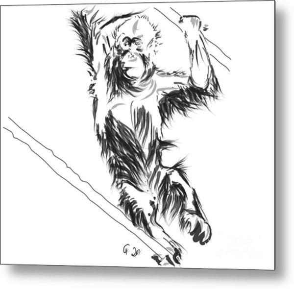 Orangutan 3 Metal Print