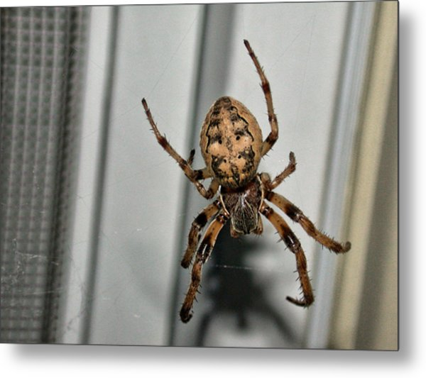 Metal Print featuring the photograph Orb Weaver by David Armstrong