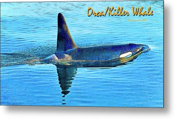 Orca Killer Whale Digital Art Metal Print by A Gurmankin