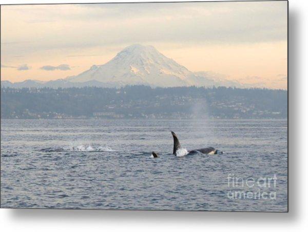 Orcas And Mt. Rainier Metal Print