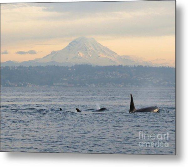 Orcas And Mt. Rainier II Metal Print