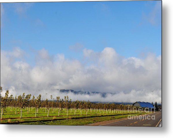 Orchards In The Sun Metal Print