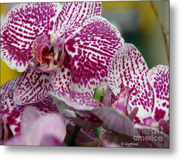 Orchid Art Metal Print by Greg Patzer