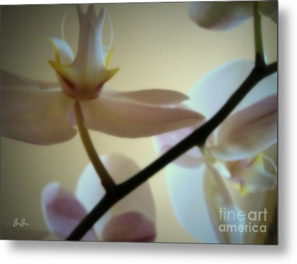 Orchid Composition Metal Print