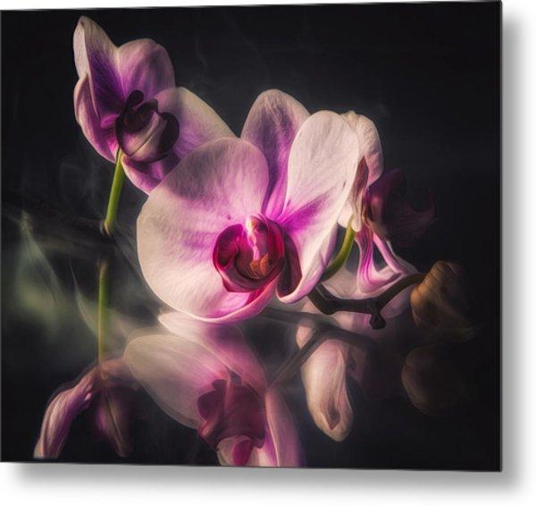 Orchid Dreams Metal Print