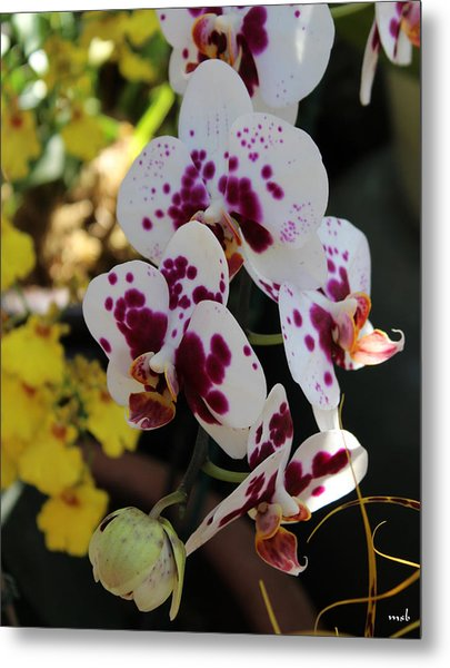 Orchid Four Metal Print by Mark Steven Burhart