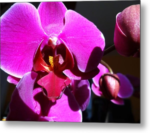 Orchid From My Valentine 3 Metal Print