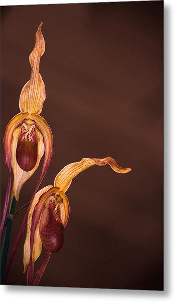 Orchid Greeting Metal Print