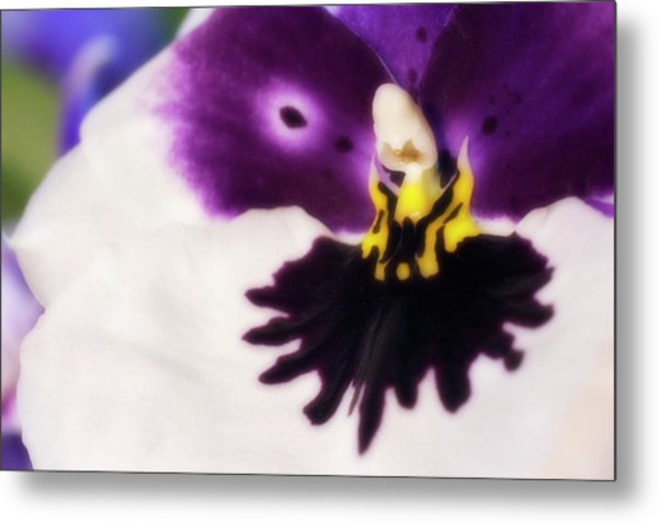 Orchid Labellum (miltoniopsis Sp.) Hybrid Metal Print by Maria Mosolova/science Photo Library