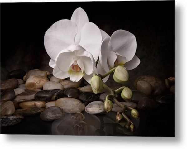 Orchid - Sensuous Virtue Metal Print