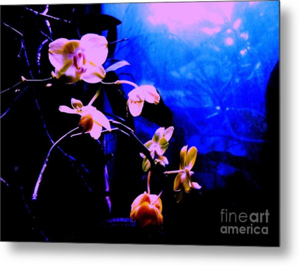 Orchidia Metal Print