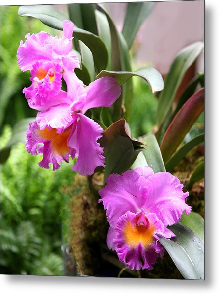 Orchids At The Washington Botanical Metal Print by Carol Kinkead