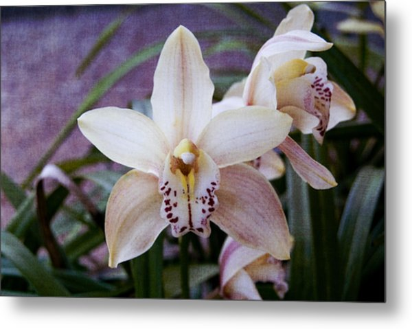 Orchids Metal Print by Heather Provan