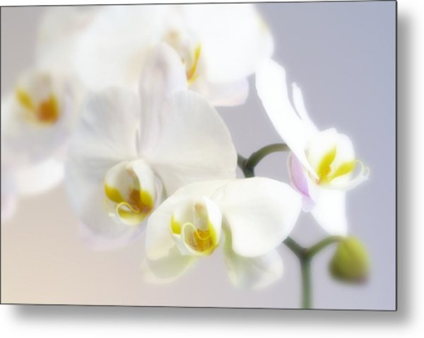 Orchids In The Mist Metal Print