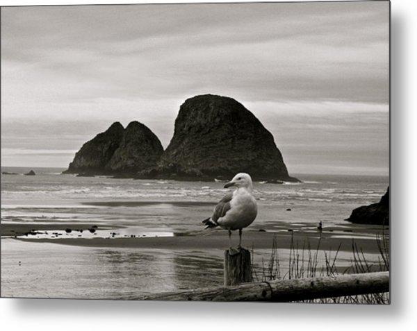 Oregon Shorebirds Metal Print