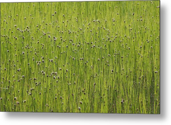 Organic Green Grass Backround Metal Print