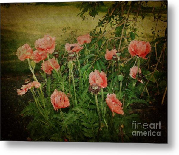 Oriental Poppies Metal Print
