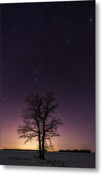 Orion Tree Metal Print