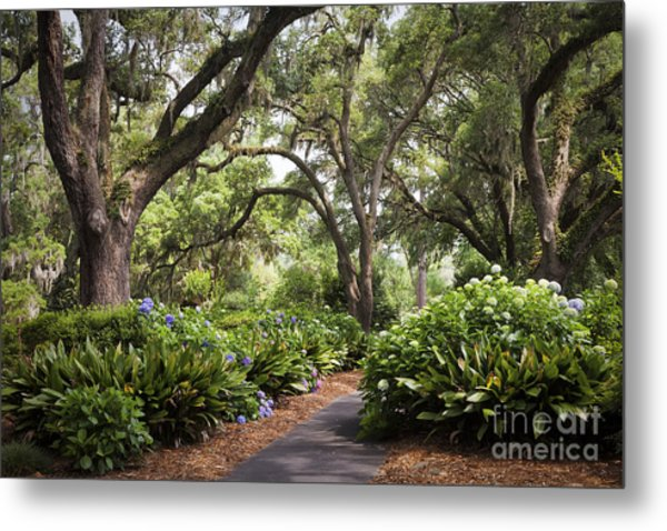 Orton Plantation Scenic Walkway Brusnwick County Nc Metal Print