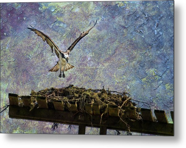 Osprey-coming Home Metal Print