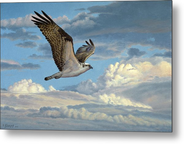 Osprey In The Clouds Metal Print
