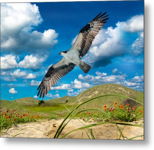 Osprey On Shackleford Banks Metal Print
