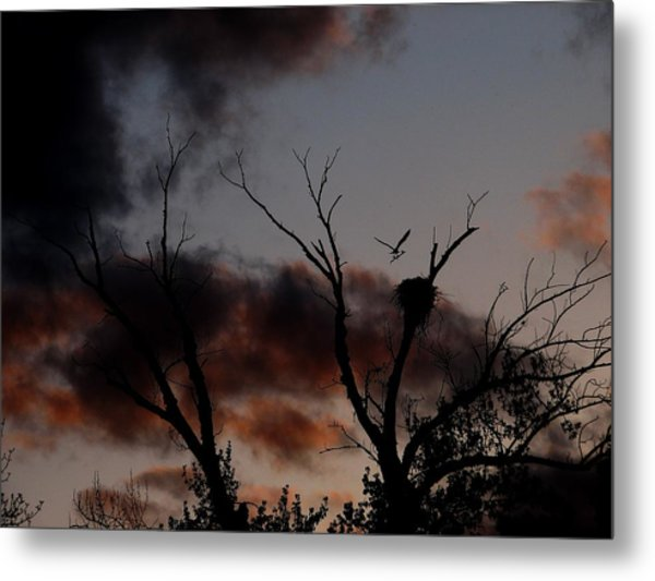Ospreying Metal Print