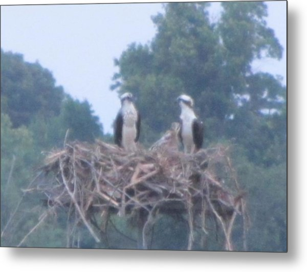 Osprey's Chatting On The Chesapeake Bay Metal Print by Debbie Nester