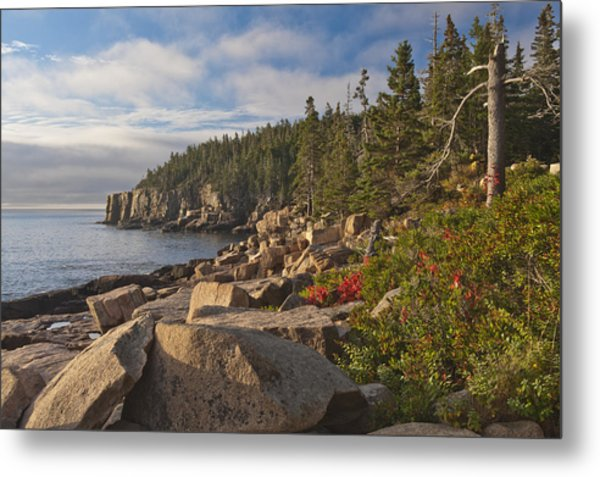 Metal Print featuring the photograph Otter Cliff Morning by Rick Hartigan
