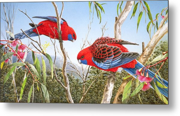 Our Beautiful Home - Crimson Rosellas Metal Print