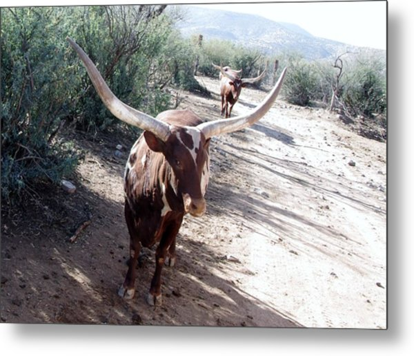Out Of Africa  Long Horns Metal Print