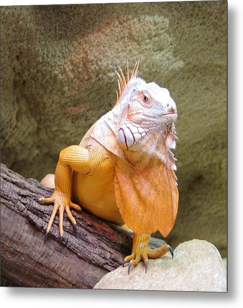 Out Of Africa Orange Lizard 1 Metal Print