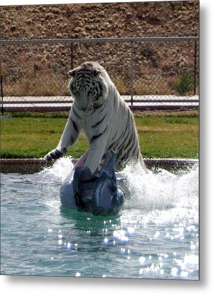 Out Of Africa Tiger Splash 1 Metal Print