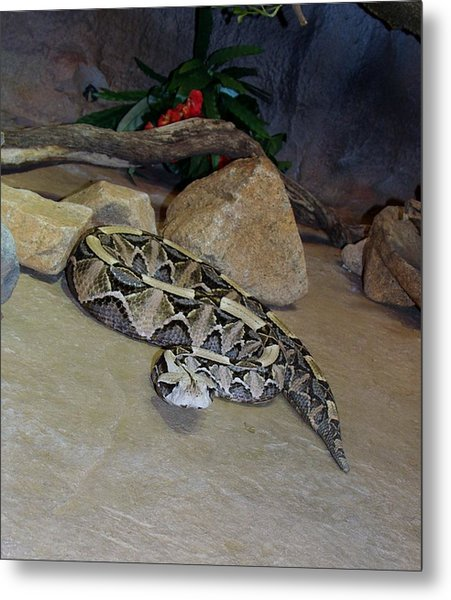 Out Of Africa Viper 2 Metal Print