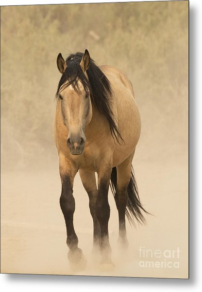 Out Of The Dust Metal Print