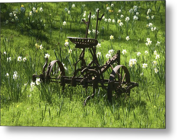 Metal Print featuring the photograph Out To Pasture 2 by Sherri Meyer