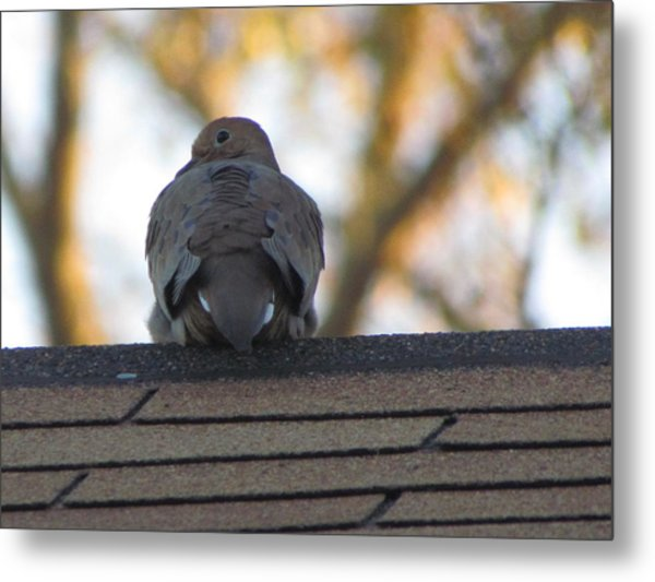 Over The Shoulder Metal Print by Rickey Rivers Jr