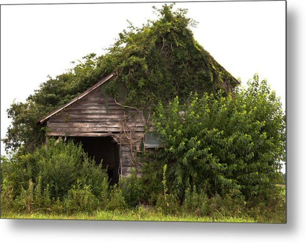 Overgrown By Green Metal Print