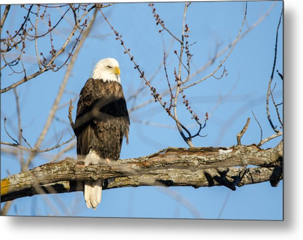 Overlooking Freedom Metal Print