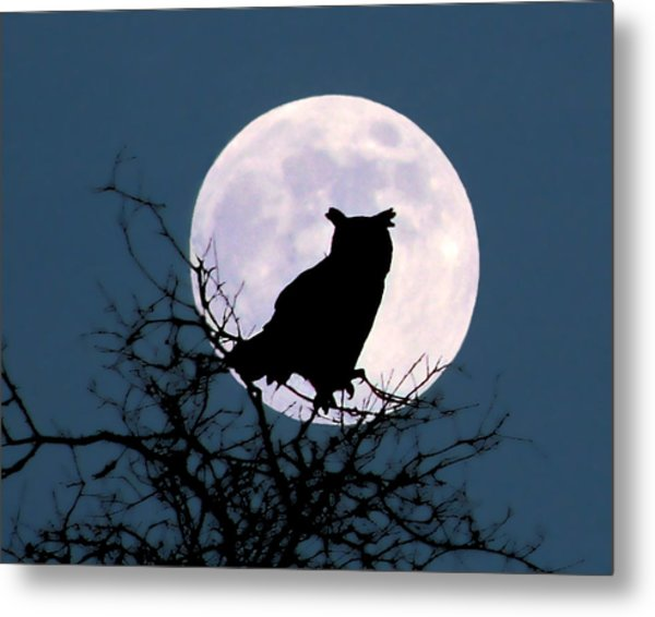 Owl And Blue Moon Metal Print