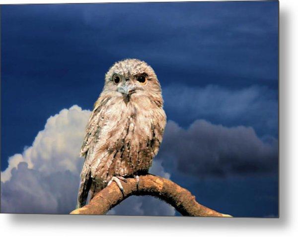 Owl At Dusk Metal Print