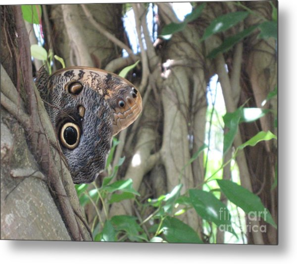 Owl Butterfly In Hiding Metal Print