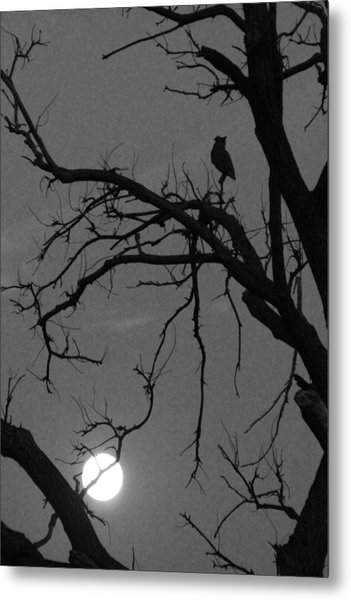 Owl By Night Metal Print