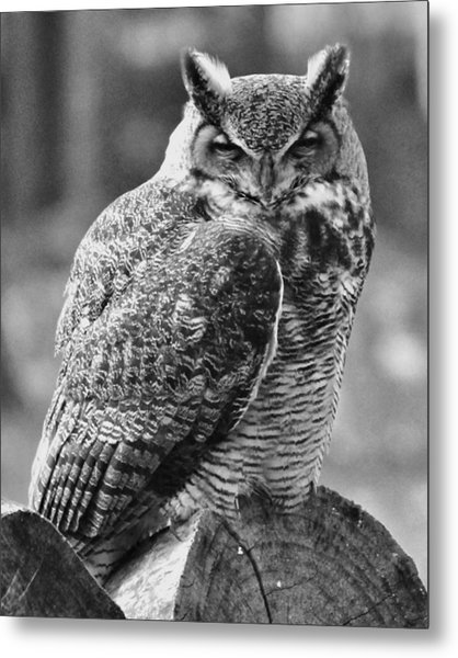 Owl In Black And White Metal Print